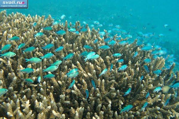 Тонга, Вавау, подводный мир.