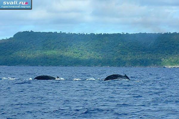 Тонга, Вавау, Киты в прибрежных водах